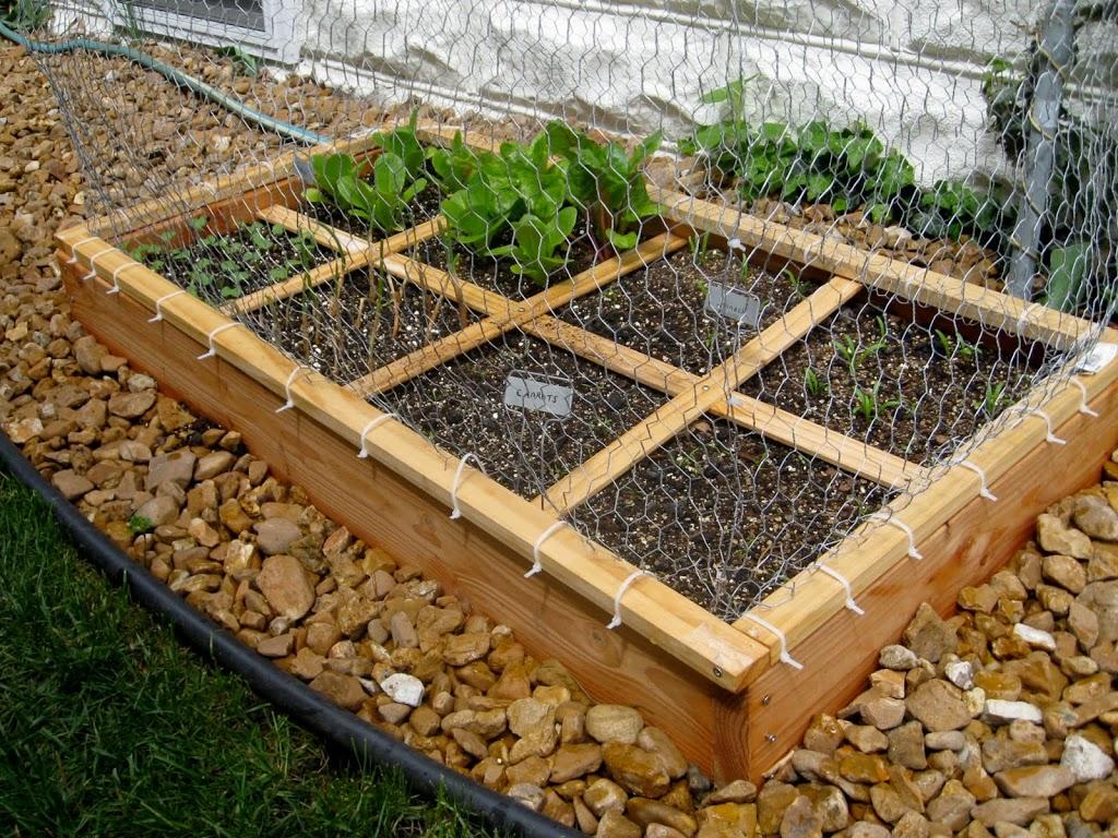 Square Foot Gardening-Update