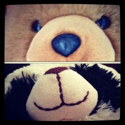 stuffed animal bears