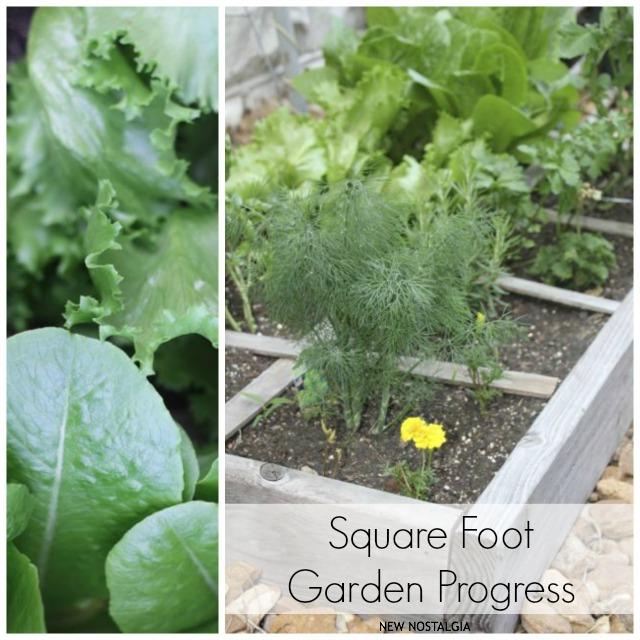 Square foot garden progress