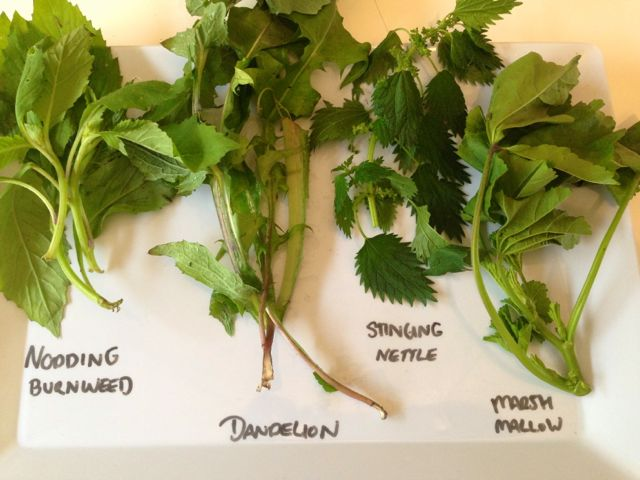 greens to juice, burnweed, dandelion, stinging nettle, marshmallow