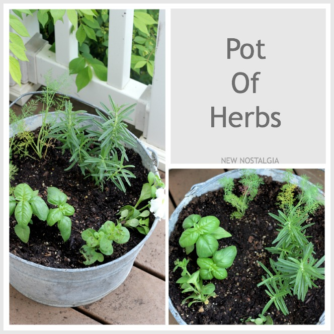 POT-OF-HERBS-COLLAGE