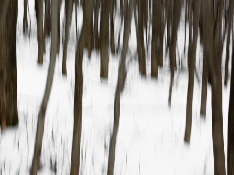 Artistic abstract photographic image of bare trees on a hillside in winter. Taken in the northeastern USA on a snowy day.