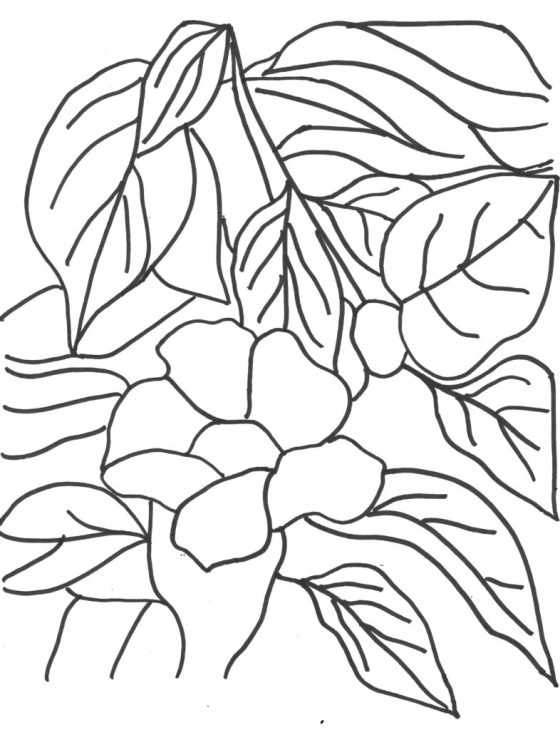Free Hibiscus Coloring Page printable of my original artwork