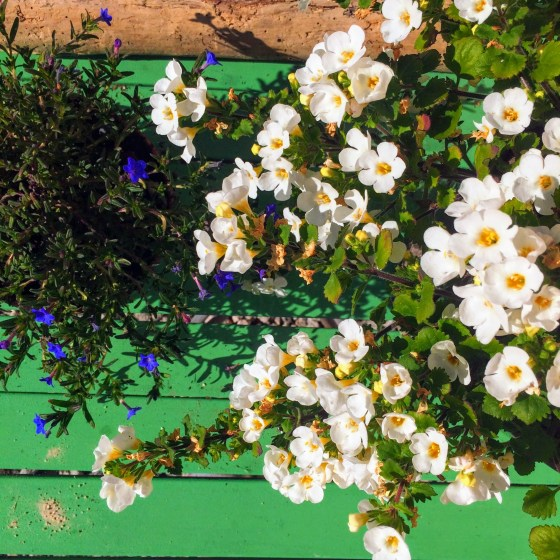 Spring garden in bloom