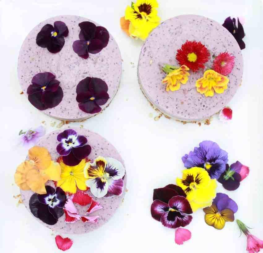 Raw Berry Cheesecake-vegan and gluten free