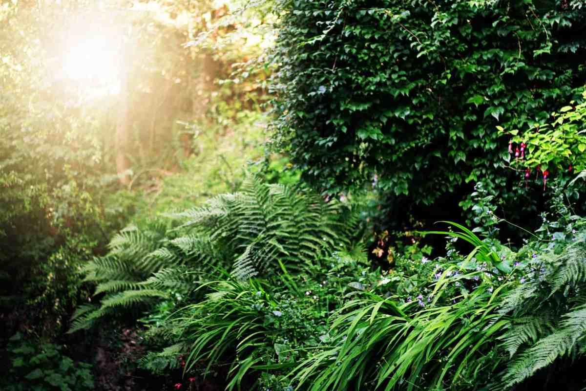 sun setting in garden