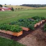 Cedar Raised Garden Beds Made From Fence Pickets Single Width Ana White