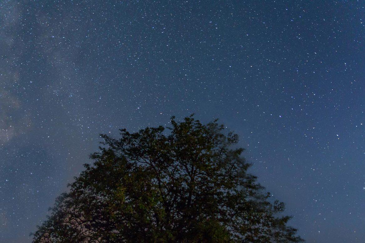 Tree silhouette at night