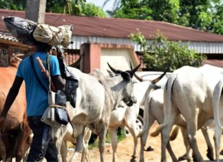 We Will Confiscate The Cows Of Anyone Caught Destroying Farmland -Miyetti Allah