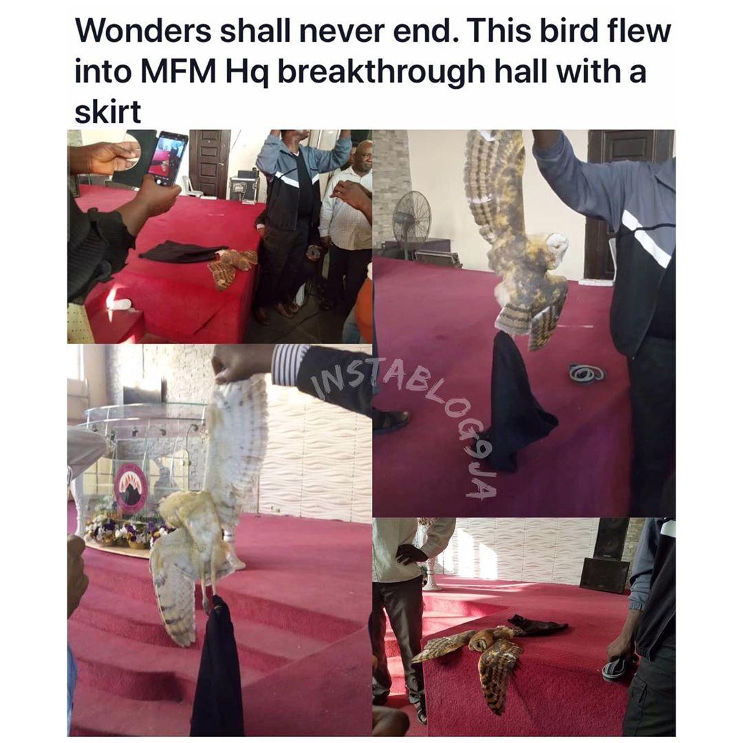 Strange Bird In Skimpy Skirt Flies Into MFM Church During Service (Photo)