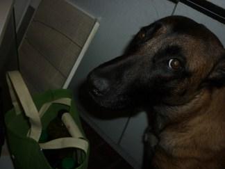Abbin vyplašený, nevinný pohľad :P