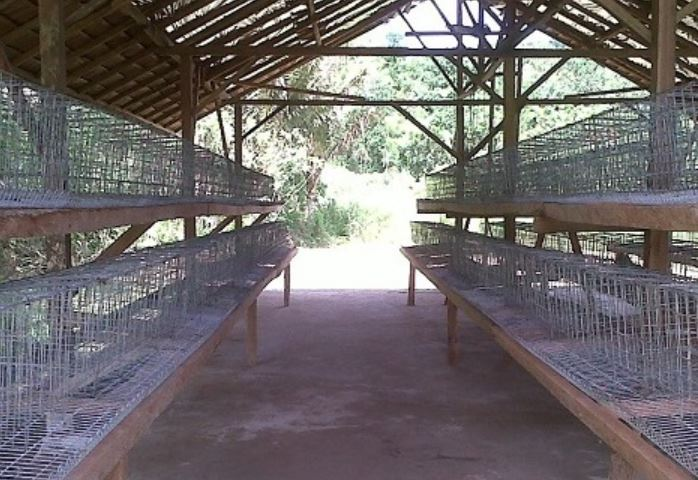 Jenis Kandang Ayam Sangkar