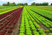 Prospek Kerja Agribisnis yang Harus Kamu Ketahui