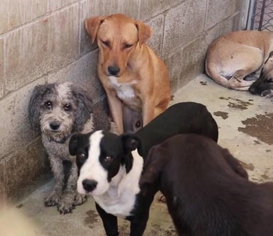 Perros callejeros, Perrera, Adopción,