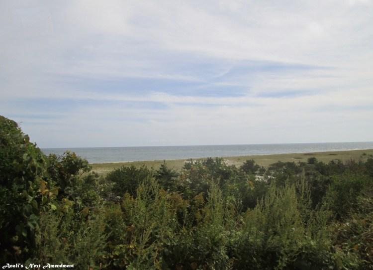 Nantucket shrubs + ocean