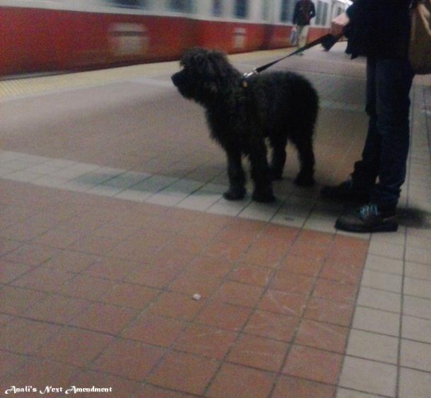Dog on platform