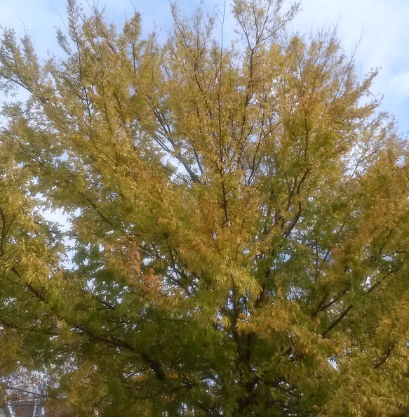 yellowish green tree