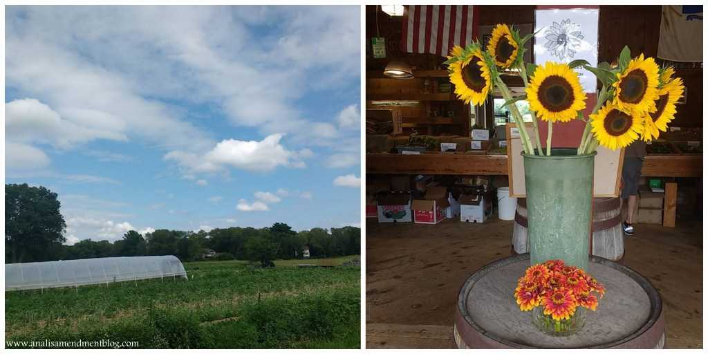 Hanson_Farm_field_and_flowers