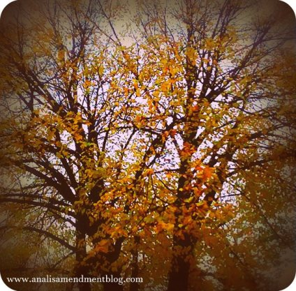 Brightly colored leaves on tree in the fall.