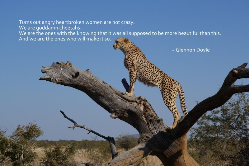 Text of Glennon Doyle quote on picture of cheetah on tree limb.