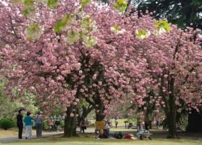 La primavera inspira a los artistas, que sacan sus lienzos a la calle para dar rienda suelta a su arte y pintar algunos de los más bellos paisajes/ Foto: Turismo de Japón