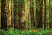 Las colosales secuoyas de este bosque del Parque Nacional Sequoia & Kings Canyon se elevan 80 metros del suelo, como edificios de 26 pisos. Algunas llevan casi 2.000 años resistiendo incendios, tormentas y talas, y ahora son el objetivo de una increíble red de senderos. El Big Trees Trail, de apenas un kilómetro, conduce hasta la secuoya General Sherman, el ser vivo más grande del planeta/ Foto: Diane Diederich - Getty Images