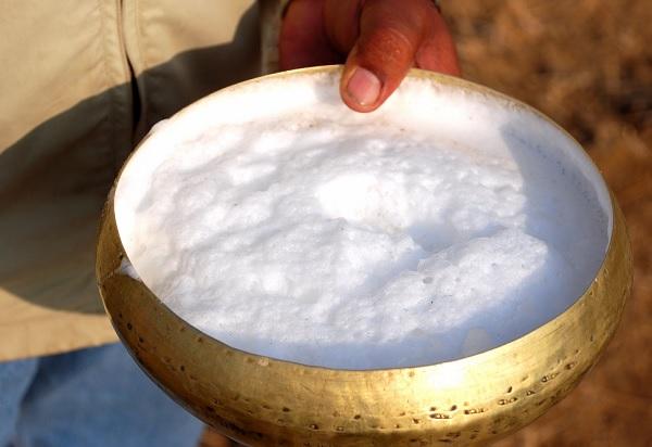الفوائد الصحية لحليب الابل