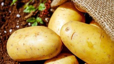 Photo of هل تسبب البطاطس المسلوقة زيادة للوزن ؟