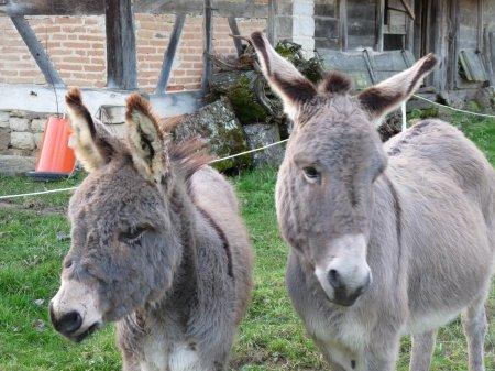 Cadichon et Quanelle vous souhaitent une excellente année 2013