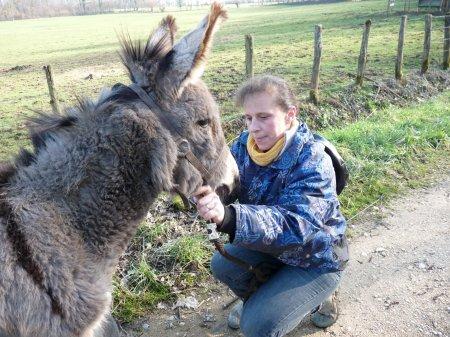 Mise du licol à l'ânon
