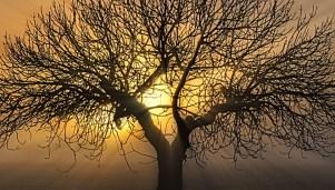 La familia es un árbol mágico en el interior de cada uno.