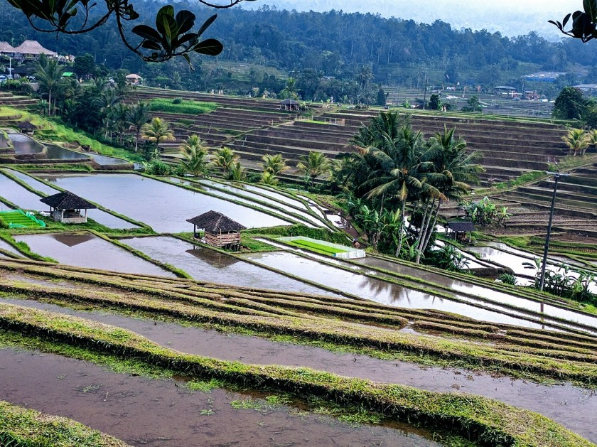 Rice Terraces - Bali Top 5 Attractions
