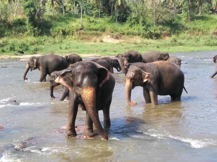 Pinnawala elephant orphanage Kandy SriLanka