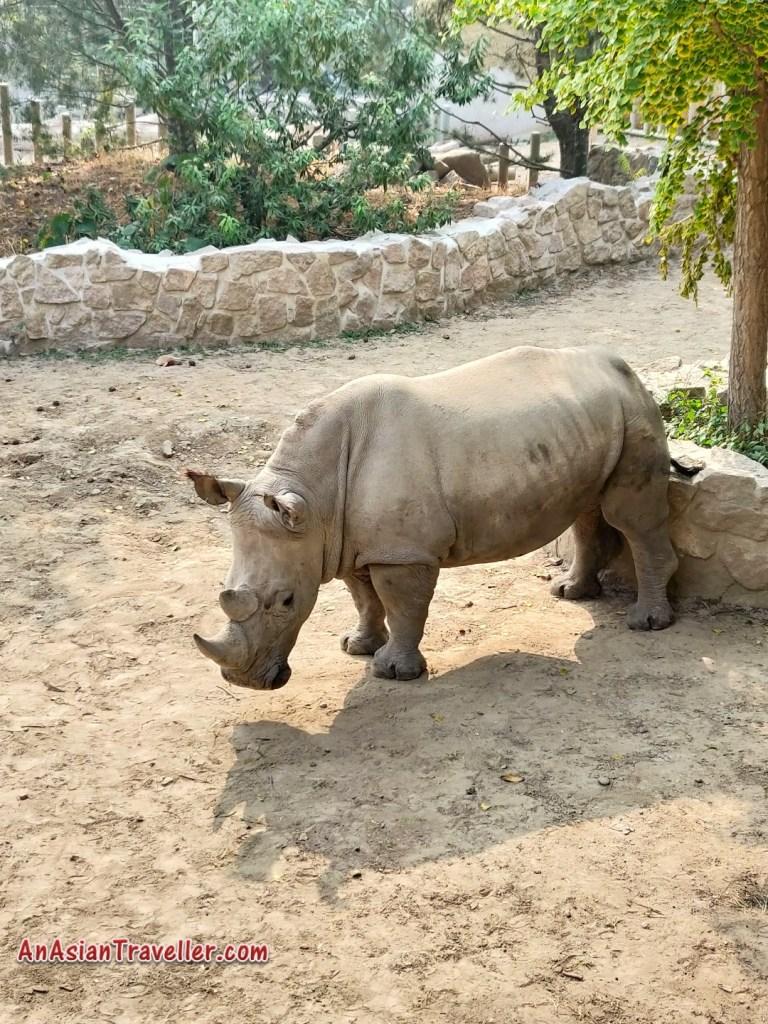 Rhinoceros Beijing Zoo
