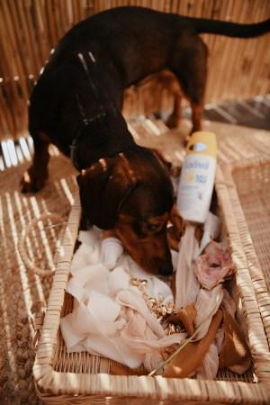 Pets and sunscreen by Anastasija