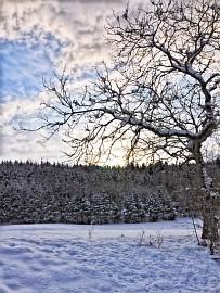 winterDSC_0159-270