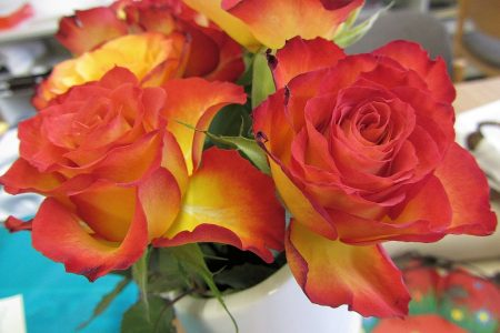 Auch von der Seite sehen die Rosen trefflich aus. Nur mit der Vase bin ich immer noch nicht ganz zufrieden. (Foto: Martin Dühning)