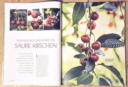 In der Ausgabe Juli/August 2013 dreht sich vieles um den hochsommerlichen Garten.