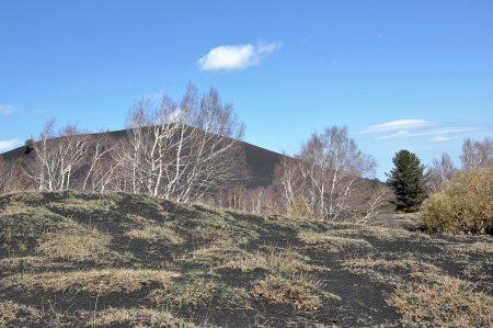 Birkengrüppchen, Grasflecken und Pinien an der Baumgrenze (Foto: Martin Dühning)