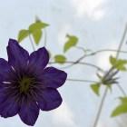 Einige Blüten Ende Juli