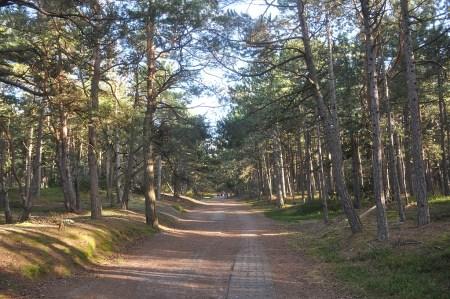 Waldweg zum Leuchtturm (Foto: Martin Dühning)