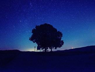 Linde unter dem Sternenhimmel (Foto: Martin Dühning)