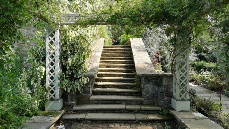 Umrankte Treppe (Foto: Martin Dühning)