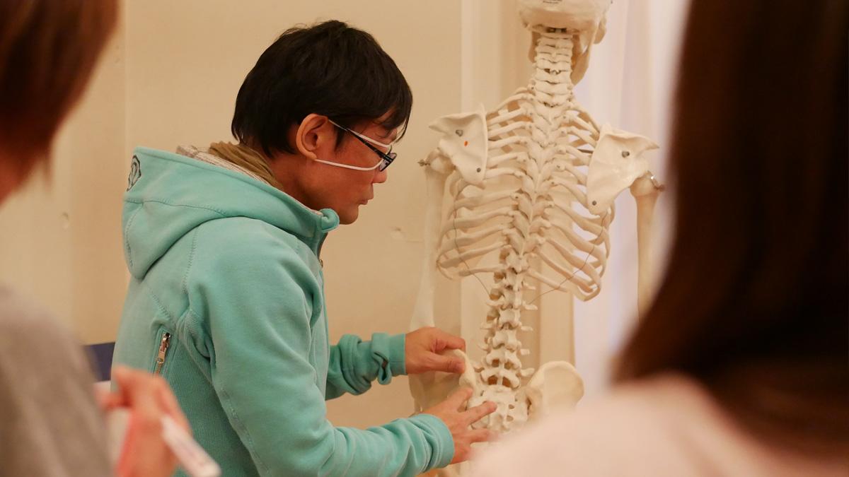 内田,ヨガ解剖学,怪我をしないさせない,模型