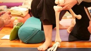 腿から足先までの骨模型を人の足と並べている様子