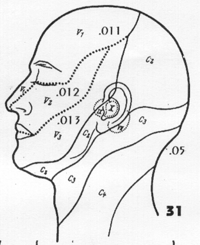 11 Cutaneous Nerves Head 2 32