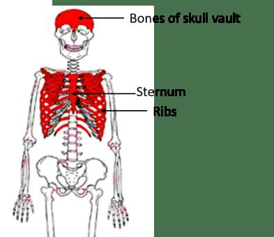 Bone Anatomy Qa