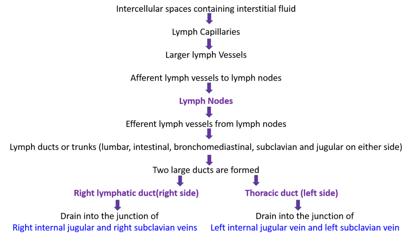 lymphatic drainage flow chart