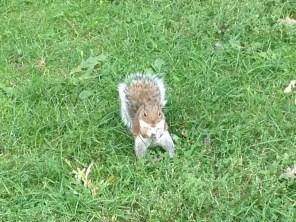 High Park squirrel