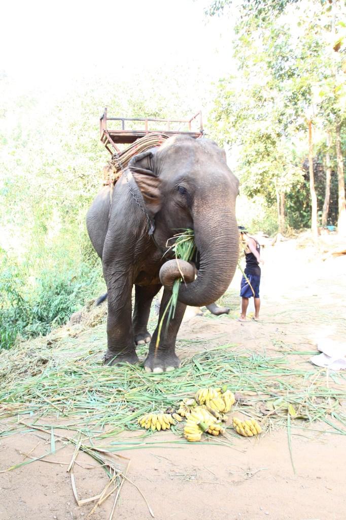 Chang Mai – plimbare cu elefantii